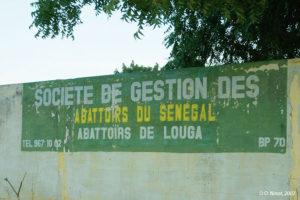 Les abattoirs de Louga