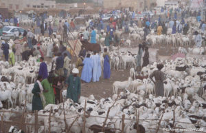 Marché de moutons de Tabaski à Khombole, région de Thiès