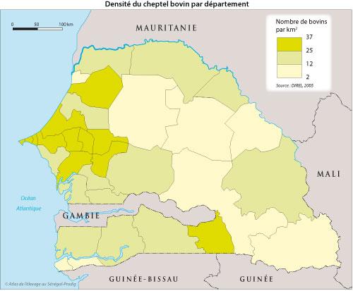 Sénégal-Les territoires de l'élevage-Peut-on cartographier le cheptel national ?-Densité du cheptel bovin par département