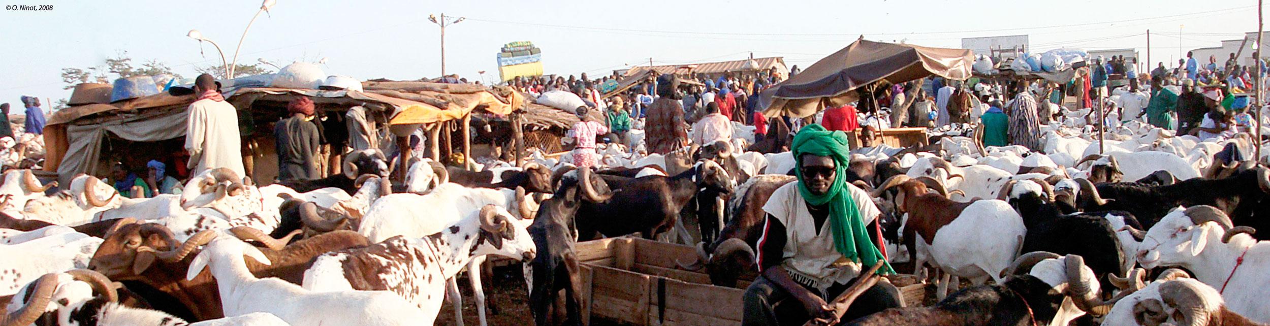 Sénégal-Marché de moutons pendant la Tabaski à Dakar