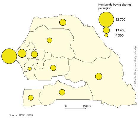 Sénégal-Le commerce de bétail sur pied-Dakar, foyer de consommation du Sénégal-Nombre de bovins abattus par région en 2005
