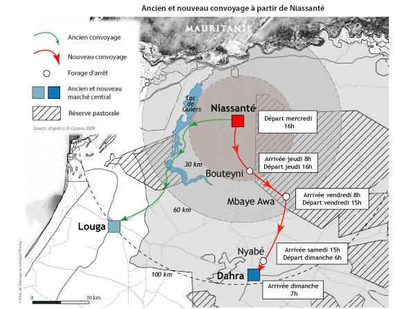 Sénégal-Le commerce de bétail sur pied-Dahra, capitale de l'élevage-Ancien et nouveau convoyage à partir de Niassanté