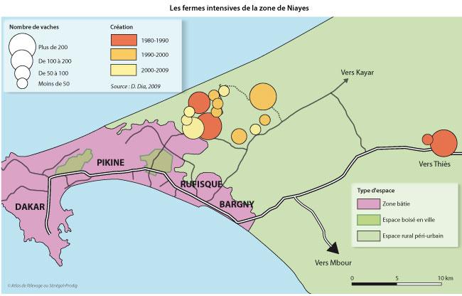 Sénégal-La filière lait, du global au local-Du lait à la périphérie de Dakar-Les fermes intensives de la zone de Niayes