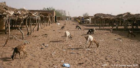 Sénégal-Le commerce de bétail sur pied-Le développmement des marchés hebdomadaires-La même rue le lendemain