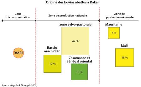 Sénégal-Le commerce de bétail sur pied-Dakar, foyer de consommation du Sénégal-Origine des bovins abbatus à Dakar
