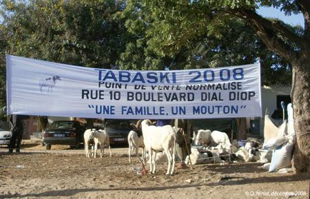 Sénégal-Le commerce de bétail sur pied-La Tabaski, géographie de la fête des moutons-Un point de vente normalisé à Dakar