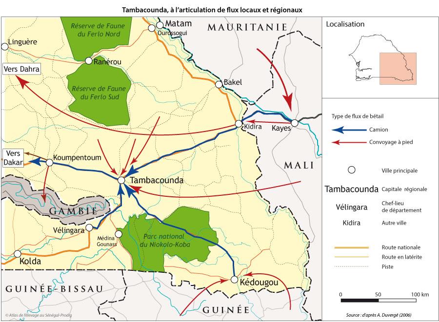 Sénégal-Le commerce de bétail sur pied-Tambacounda,l'essor d'un carrefour de bétail-Tambcounda, à l'articulation de flux locaux et régionaux